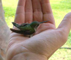 Bird in hadn
