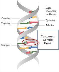 Cc gene